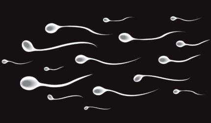 Нет сперматозоидов в спермограмме! Что делать?