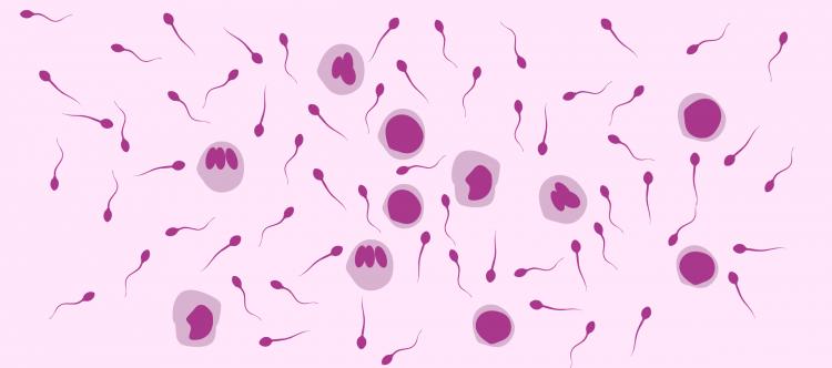 Вирусы - причина мужского бесплодия