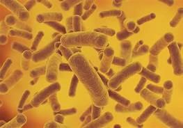 Бактерии в моче.